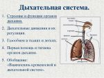 Дыхательная система органов функции – Дыхательная система человека | Fit-baza.com