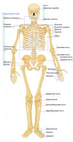Сколько костей в голове человека – сколько всего костей в скелете человека, скелет головы, что входит в состав лицевого скелета, сколько всего позвонков у человека, строение позвонка, сколько всего ребер у человека, скелет верхних конечностей, строение кисти человека, скелет нижних конечностей, функции скелета, , , Официальный сайт Владимира Сахненко