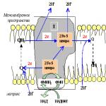 Атф образуется в – 2.Тканевое дыхание. Последовательность расположения ферментных комплексов. Характеристика f- цикла. Образование атф.