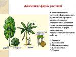 Наиболее распространенные жизненные формы растений вашей местности – Параграф 2. Многообразие жизненных форм растений.